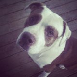 Bandit, my uncle's dog by MJandGhostAdventures