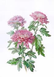 Three chrysanthemums by gudzolga