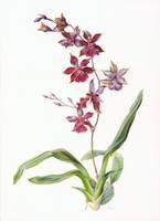 Oncidium by gudzolga