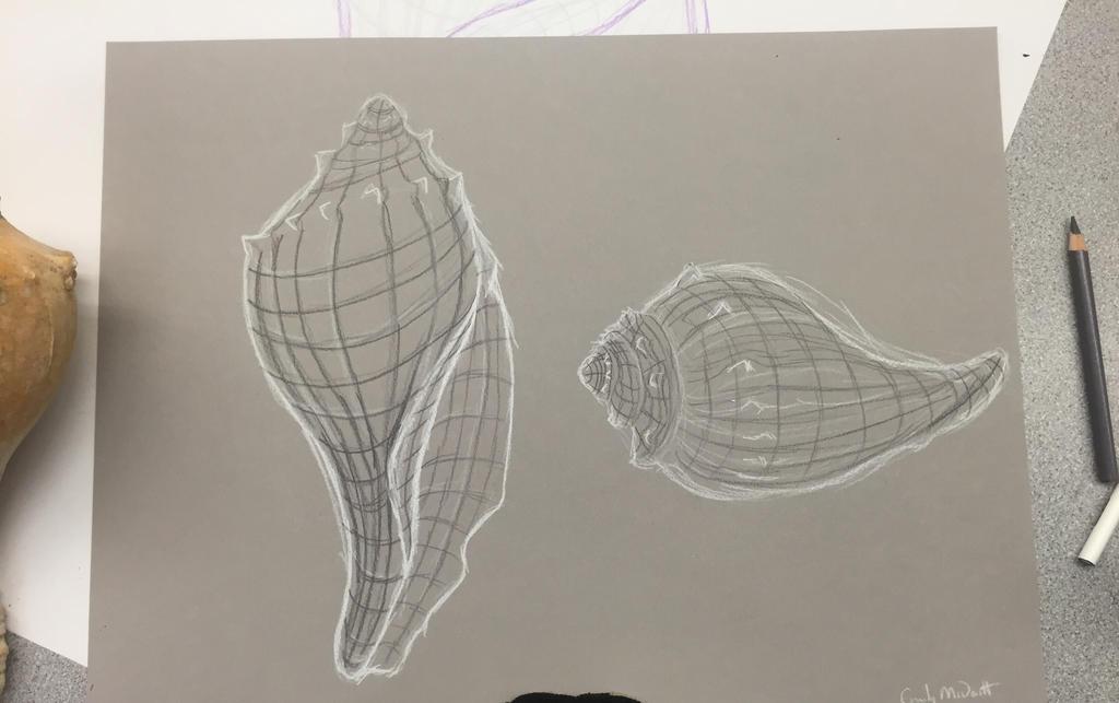 Contour Line Drawing Shell : Cross contour shell by disenchantedspirit on deviantart