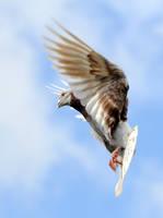pigeon 3 by Megan1970