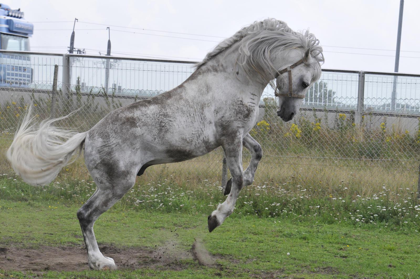 Horse fun by Megan1970