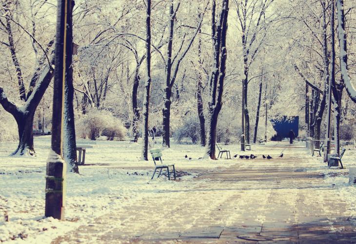 snow. by anusz