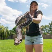 Reticulated Python (Pythons and Snakes)