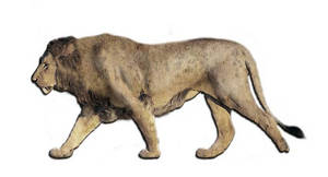 American Lion (Lions)