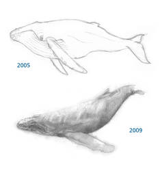 Drawing Progress 2005 - 2009 by flayd
