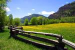Colorado Dandilions