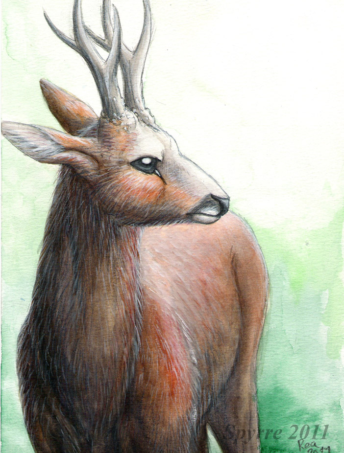 Deer portrait by Spyrre