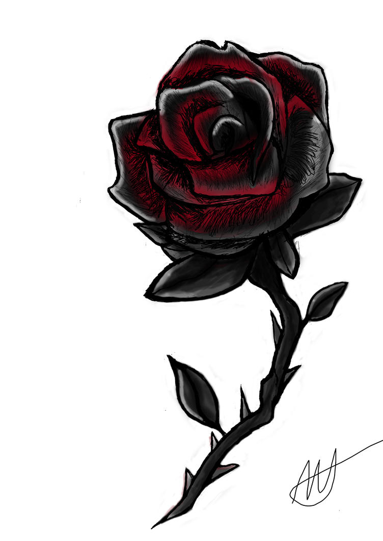 Black And Red Rose Drawing | www.imgkid.com - The Image ...