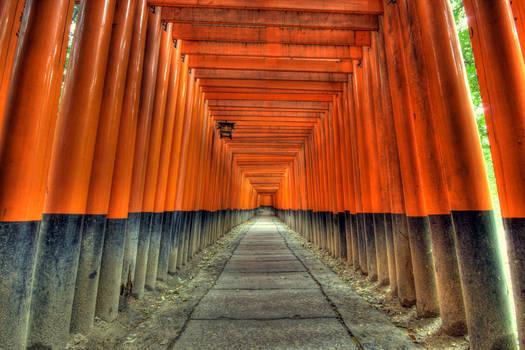 Lost in Torii
