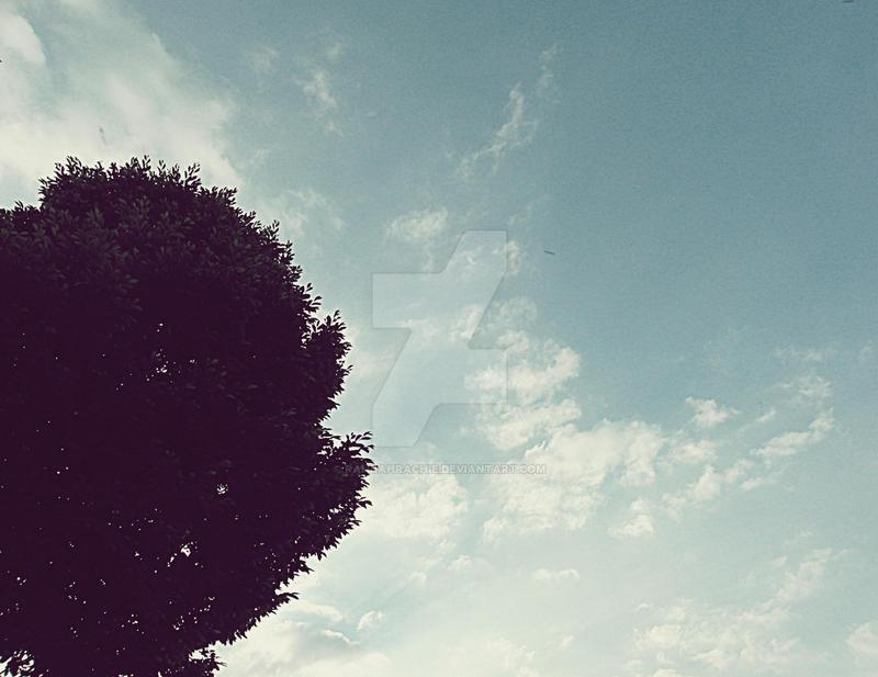 Treetop. by RahRahRachie