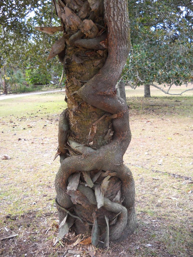 Секс фото на дерева 7 фотография
