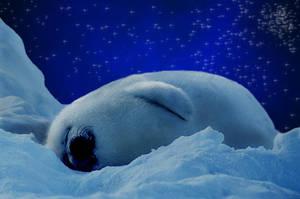 Winter Dreamer by CCMars