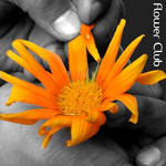 flowerclub ID