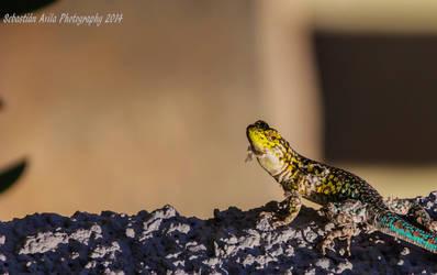 some sun by scorpion2200seba