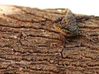 small lizard by scorpion2200seba