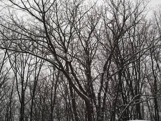 trees 121