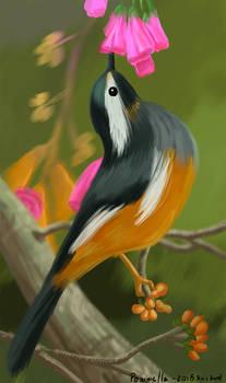Bird Series: Yellow