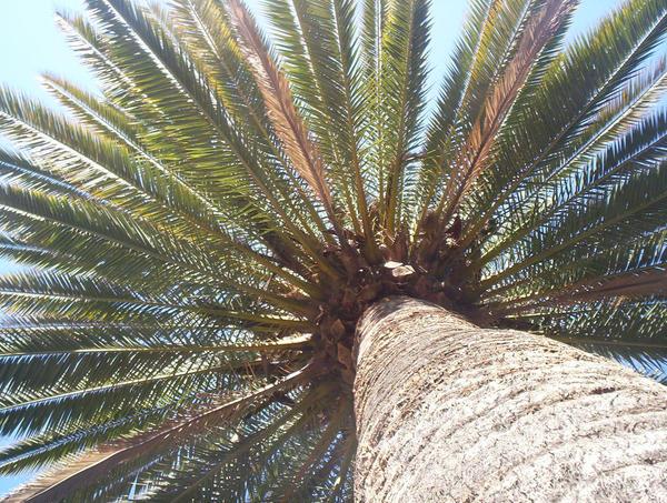 Palmtree by dirtbag007