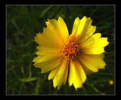 Yellow Flower by GypsyMist