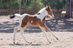 HORSE STOCK - Foal 2