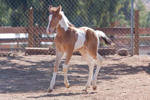 HORSE STOCK - Foal 3 by kittykitty5150