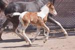 HORSE STOCK - Foal 7