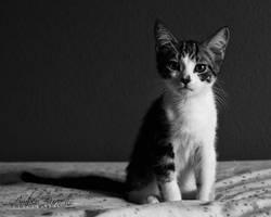 Fennel by kittykitty5150