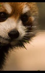 photoWORKS - n0m 05