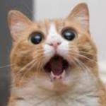 Cat72