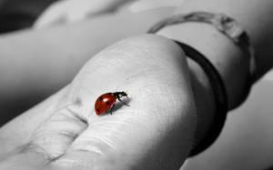 Ladybug by vicariousnostalgia