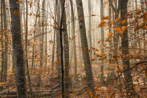 An autumn forest... by jaco353