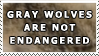 Gray Wolves Are Not Endangered