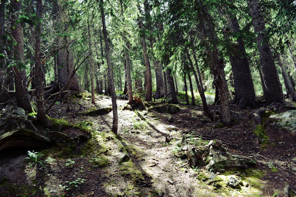 Woods by Katnam