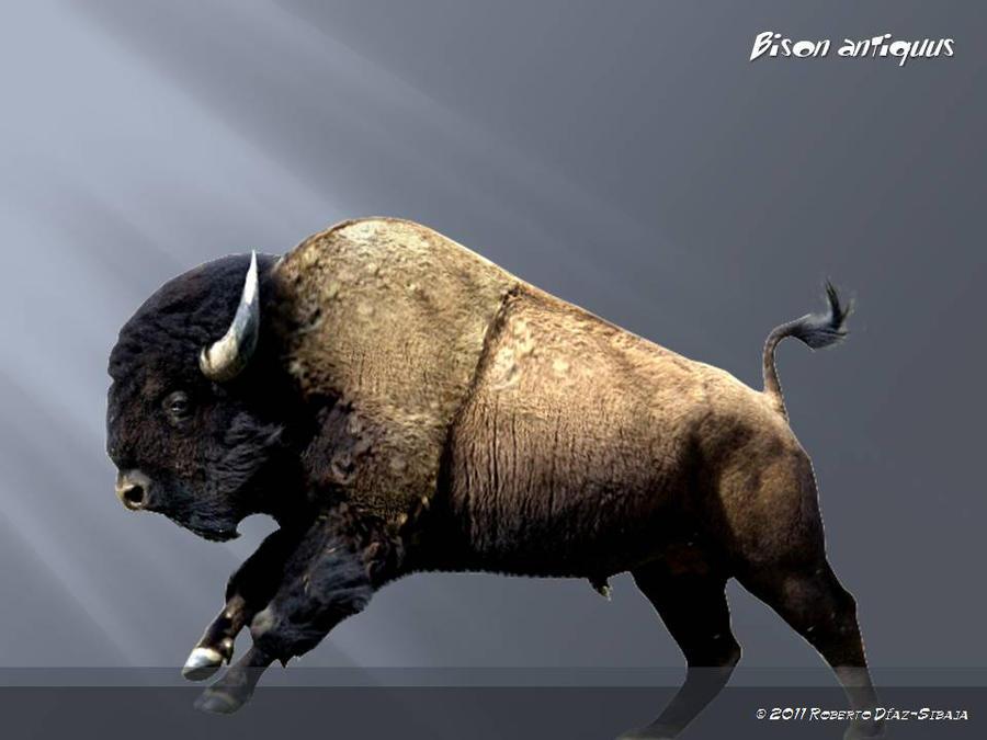 Bison antiquus wiki - photo#9