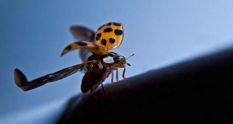Where_are_you_going_LadyBug__by_Pe11e.jpg