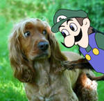 Pop goes the Weegee
