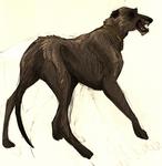 miles - irish wolfhound