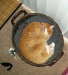 Basket of Gabby