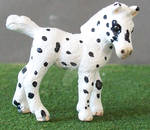 Leopard Appaloosa Miniature Filly