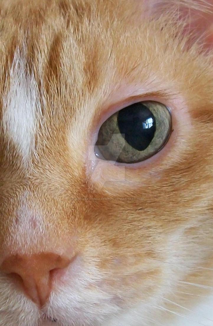 Eye see you by ElkStarRanchArtwork