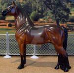 Morgan Stallion in Bay