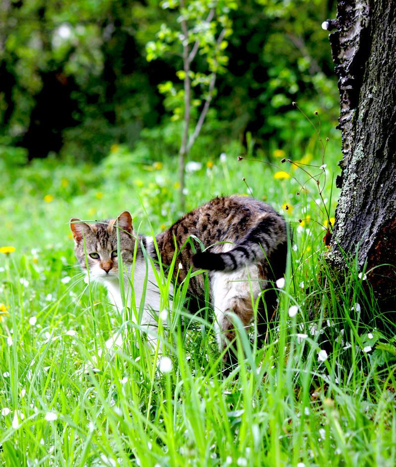Cat by fellis96