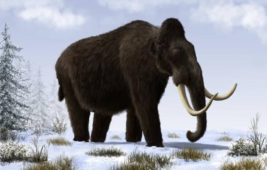 Pleistocene of Europe: Mammuthus primigenius