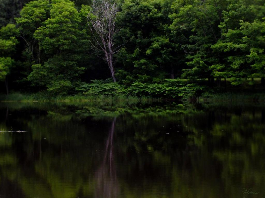 Emerald reflection