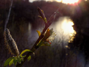Light In The Dark #2: We'll meet in the water