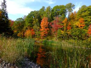 Peaceful autumn moment