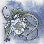 Epiphyllum Head