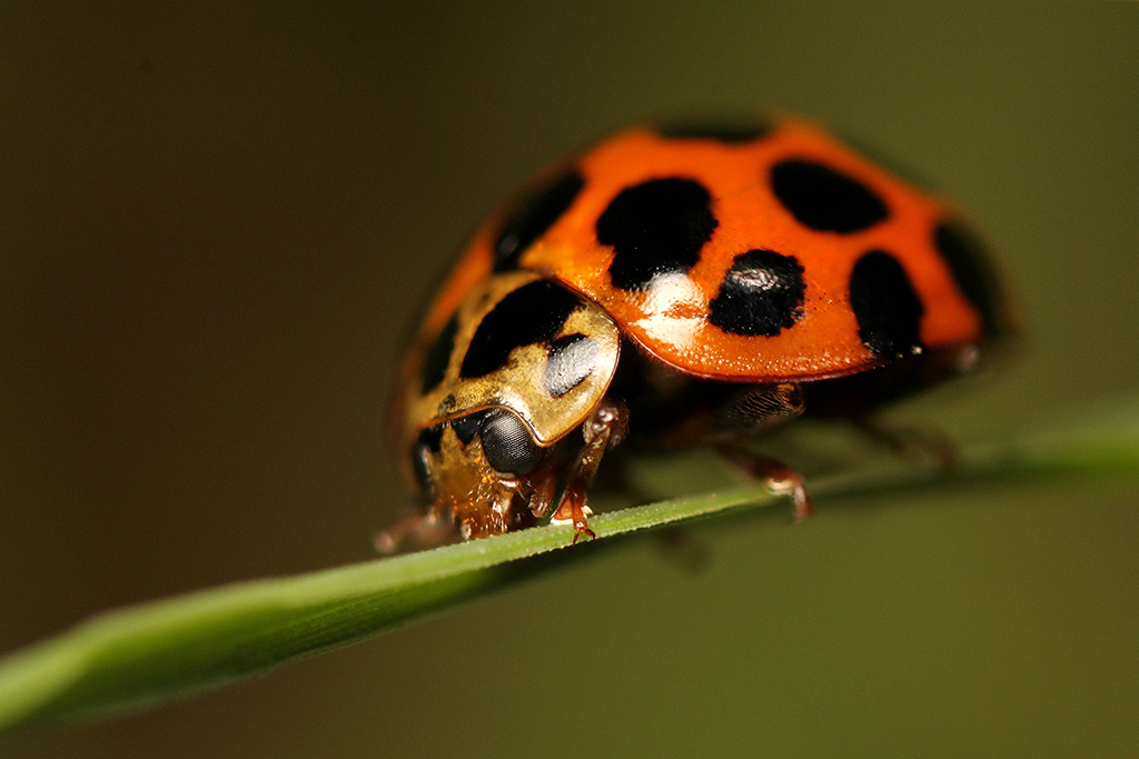 Ladybird2 by bredli84