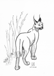 Inktober Day 2: caracal by BeansEtc